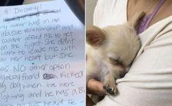 空港のトイレで、虐待を受けた生後3カ月の子犬が捨てられているのが発見される