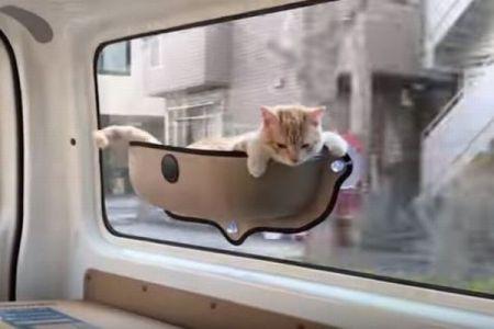 猫も気持ちよさそう!吸盤で簡単に取り付けられるペット用のベッドがユニーク