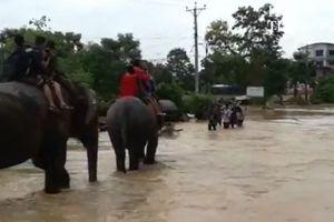 ネパールで起きた大規模な洪水、街に取り残された数百人の観光客をゾウが救う