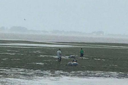 「イルマ」により海水が消失する異様な現象が発生!残されたマナティを住民が救助