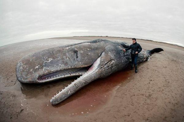 海岸に打ち上げられたクジラの大量死は、太陽フレアが原因か?新たな仮説が登場