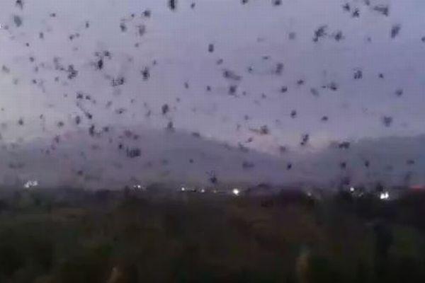 異様なほど多くのカラスが出現、夕暮れの上空を黒い影で埋め尽くす