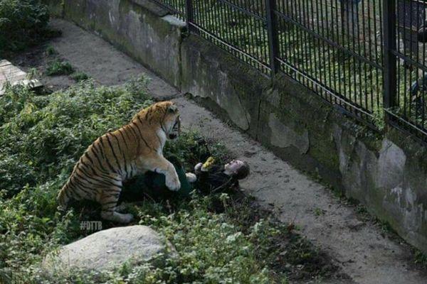 露の動物園でシベリアンタイガーが飼育員を急襲、その場面を捉えた写真がショッキング