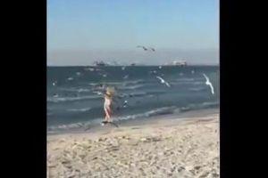 カモメにエサは危険?ビーチで与えていた少女に群れが押し寄せ、大変なことに