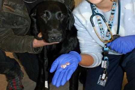 女性が失くした入れ歯、飼っている犬のお腹の中で無事?に発見される