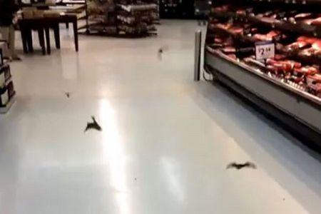 米のスーパーに複数のコウモリが出現、低空飛行で店内を飛び回る