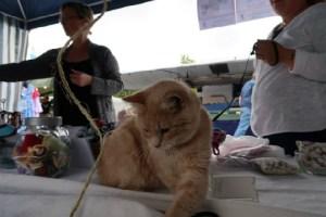 動物病院の看板ニャンコ、感染病のリスクがあるとして職務停止に