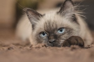 スイスで猫の所有権を巡り5年に及ぶ係争に終止符、最高裁が下した判決は…