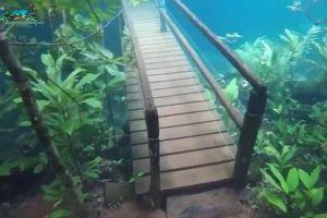 水中にハイキングコース?透き通った水に橋や道が残された映像が不思議