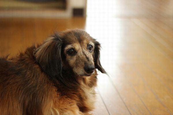 犬の肉を蝕み、死に至らしめる謎の病気「アラバマロット」が英で増加中