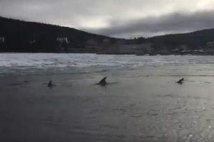 氷に閉じ込められたイルカを救え!カナダの海岸で行われたミッション成功