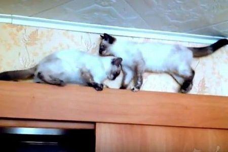 狭い場所で遭遇した2匹のネコ、互いに道を譲らず通り抜ける姿がユニーク