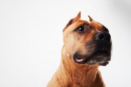 ドイツで飼い犬が突然、赤ちゃんの頭に噛みつき死亡させる事件が発生