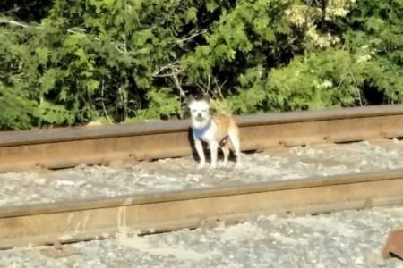 自分の直感を信じて!長時間勤務の後で、1匹の老犬を助けた女性が話題に