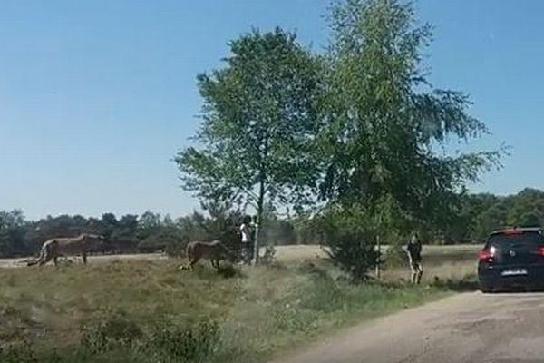 危機一髪!サファリパークで観光客が車から降り、チーターから襲われそうに