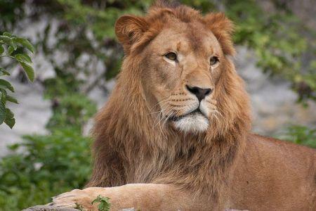 独の動物園が水害に襲われ、ライオンやトラが逃げ出すという偽情報が流れる