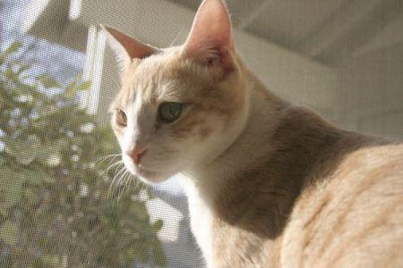 行方不明になっていたネコ、マイクロチップにより10年ぶりに飼い主と再会