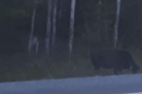 「ゴラム」か?フェイクか?カナダの森で奇妙な生き物らしい姿が撮影される
