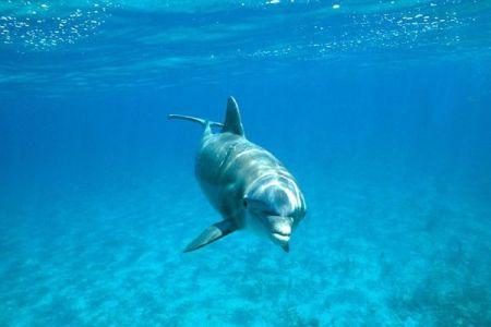 発情したイルカが人間に接近しすぎるとして、仏のビーチが遊泳禁止に