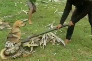 大きなヘビに襲われた犬を救うため、3人の少年が協力して戦いを挑む