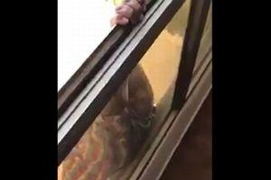 【閲覧注意】窓から落下するメイドを助けず、撮影し続けたクウェート人の女に有罪判決