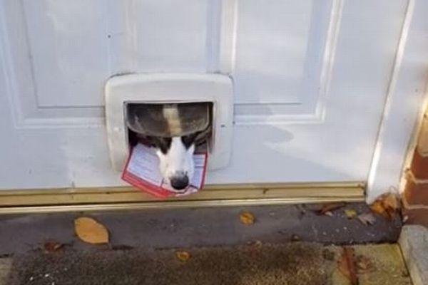 「手紙はいりません!」猫の出入口から不在票をくわえて返すワンコがユニーク
