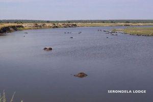アフリカの川でバッファローの群れが謎の大量死、400頭が川で発見される