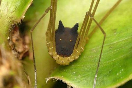 エクアドルで撮影された、黒い犬のような顔をした生き物が不思議