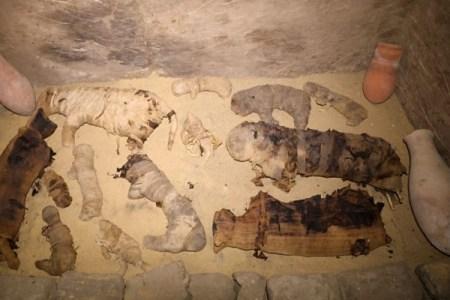4000年以上も昔のエジプトの墓から猫のミイラなど数十体が発見される