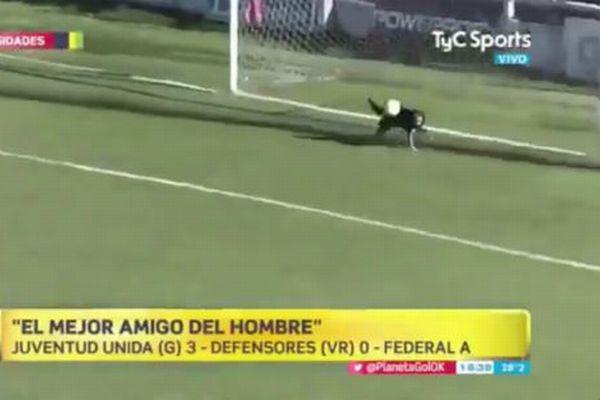 アルゼンチンでサッカーの試合にワンコが闖入、なんとゴールまで防ぐ