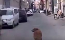 「ついてきて!」倒れた飼い主のもとへ救急車を案内したワンコが賢い
