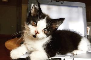 """大きな瞳を持ち、難病も抱えた""""ガラスの猫""""があまりに可愛いと話題に"""