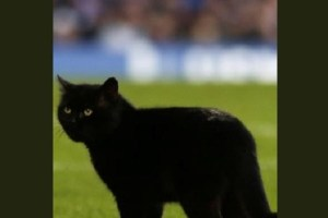 試合に突如現れたのは猫!英国でサッカーの競技中に黒猫が乱入する珍事が発生
