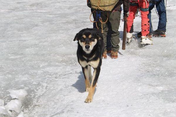 ヒマラヤの峰を登った野良犬、登山者が語る頂上への道のりが感動的