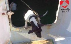 船で香港へ渡ったワンコ、タイの飼い主が現れる前に殺処分される