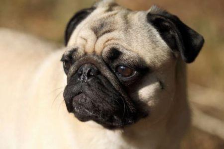 前代未聞!ドイツの市が税金を滞納した住人から愛犬を押収、ネットで販売する