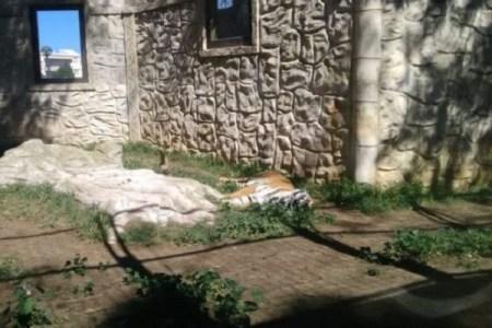 スペインの放棄された動物園、閉じ込められ衰え行く動物たちがあまりにも可哀そう…