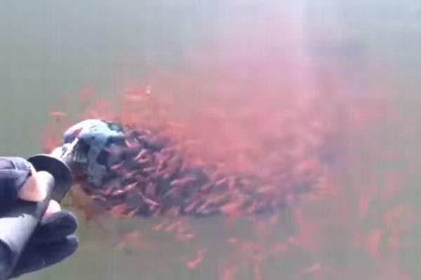 魚の母親を守ろうとする子供たち、体から離れない動画が切ない