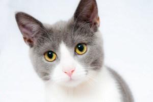 最愛のネズミが失踪し悲嘆に暮れていたホームレス、無事再会果たす