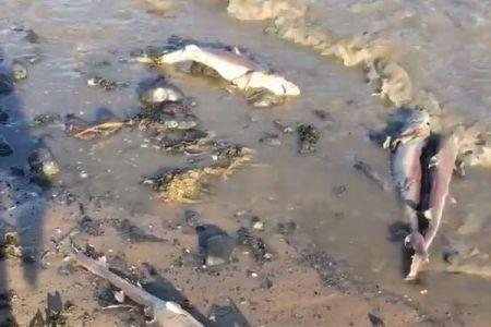 英の浜辺で不可解な光景、100匹以上のサメの死骸が打ち上がる