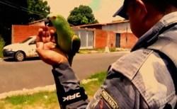 """""""警察が来た!""""ブラジルで麻薬の突入捜査、しかし逮捕されたのはなぜかオウム?"""