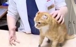 世界初!凍傷により全ての足を失った猫、4本の義足を装着し元気に歩けるように
