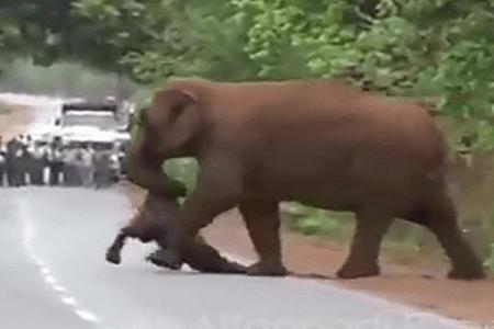 【動画】死んだ子象を悼むかのよう…象の群れによる「葬列」が心を打つ