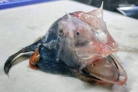 なんだこれは?豪の漁師が正体を知るためにネットに投稿した生物が不気味