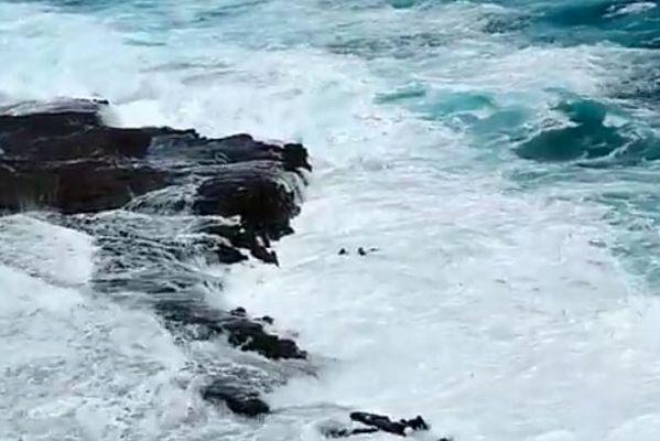 ハワイの海に落ちた夫婦を救出、荒波に飲まれそうになる映像が恐ろしい
