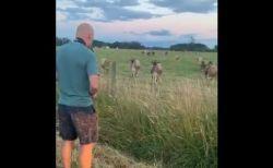 米男性が牧場でサックスを練習していたら、大量の牛が集まっちゃった