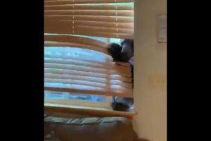 恐怖!巨大なクマが家に接近、窓から侵入を試みる瞬間が撮影される