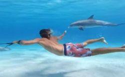 海の中を飛んでいるよう!イルカと並んで泳げるアイテムが面白そう