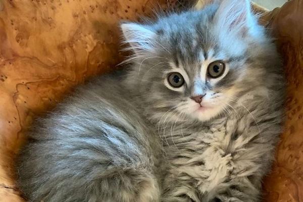 """総額270万円!米国の夫妻が企業に依頼、愛する猫を""""クローン""""として蘇らせる"""