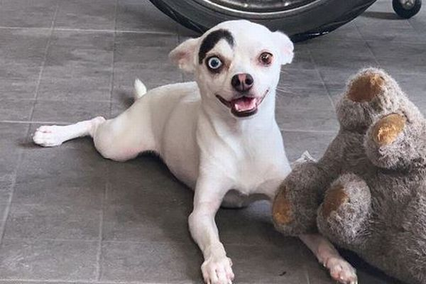 左右の目の色が異なり、眉毛も…ユニークな顔立ちをしたワンコが話題に